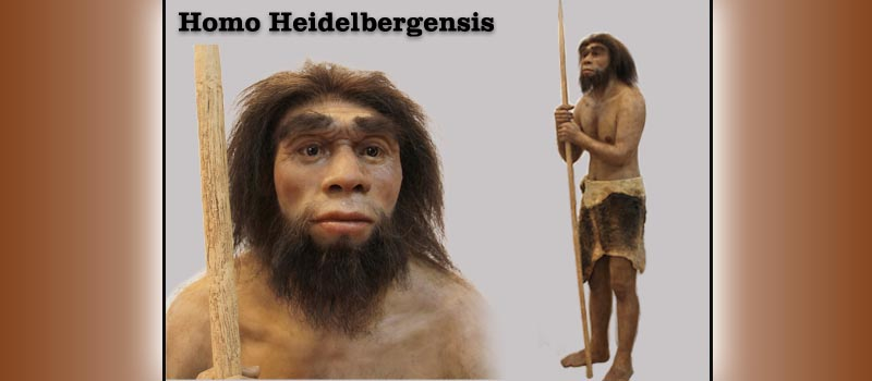 homo suburiensis paper Homo is a fully peer-reviewed journal committed to the publication of research results in biological anthropology and source normalized impact per paper.